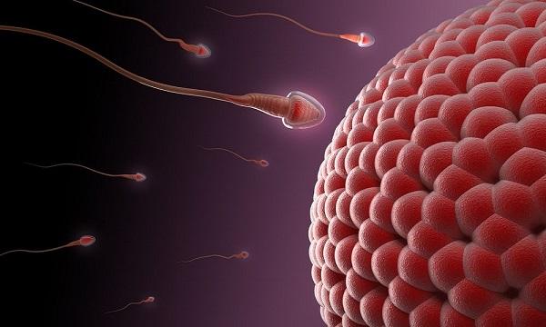Số lượng tinh trùng cần thiết để thụ thai là 1, đó là tinh trùng khỏe mạnh nhất